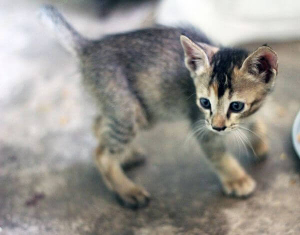 Cute Small Cat photo