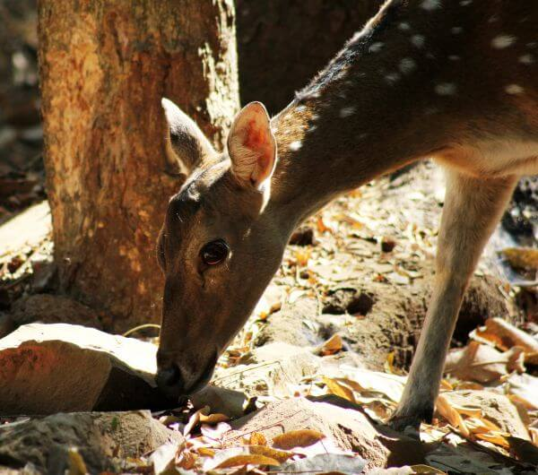 Deer Face Closeup photo