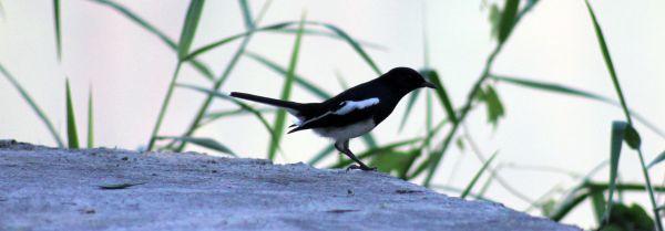 Exotic Bird photo