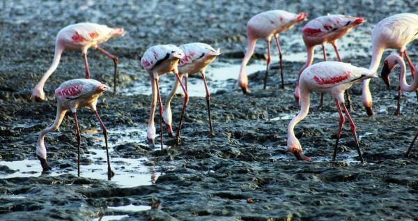 Flamingos Creek photo