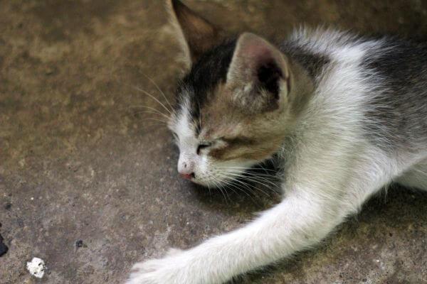 Kitten Sleeping photo