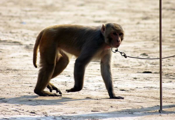 Monkey Leash photo