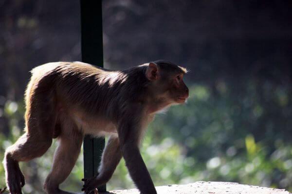 Monkey National Park photo