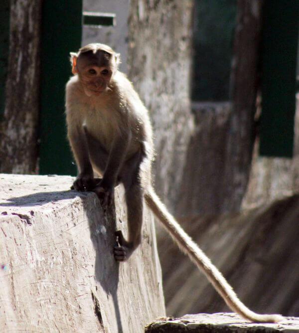 Monkey On Wall photo