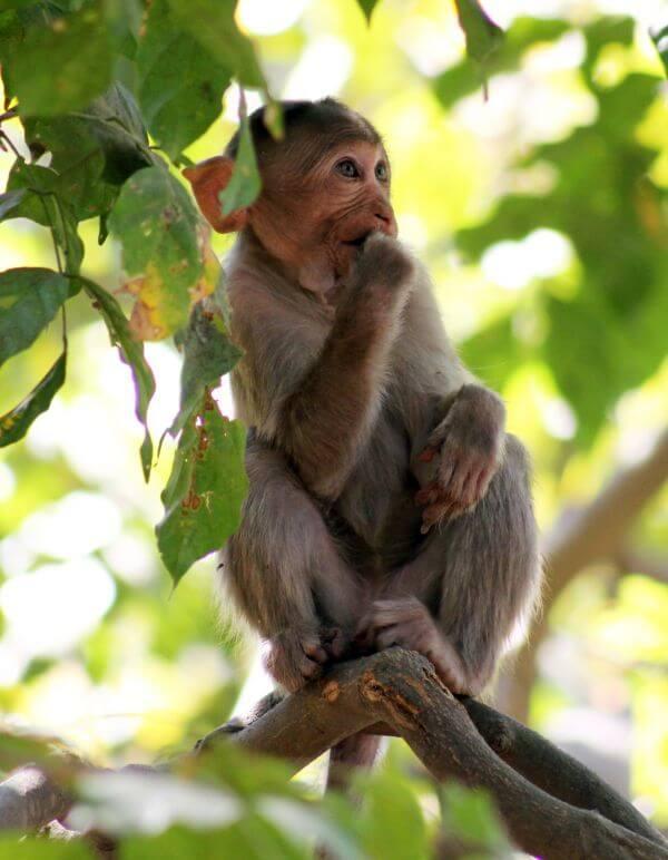 Monkey Thinking Branch photo