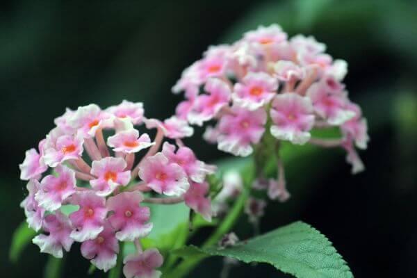 Beautiful Flower Bunch photo