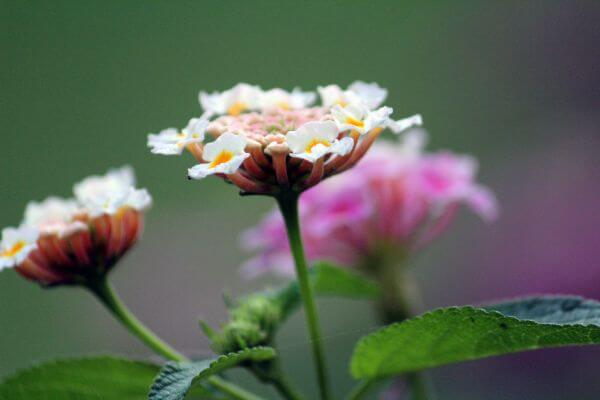 Beautiful Flowers Bunches photo