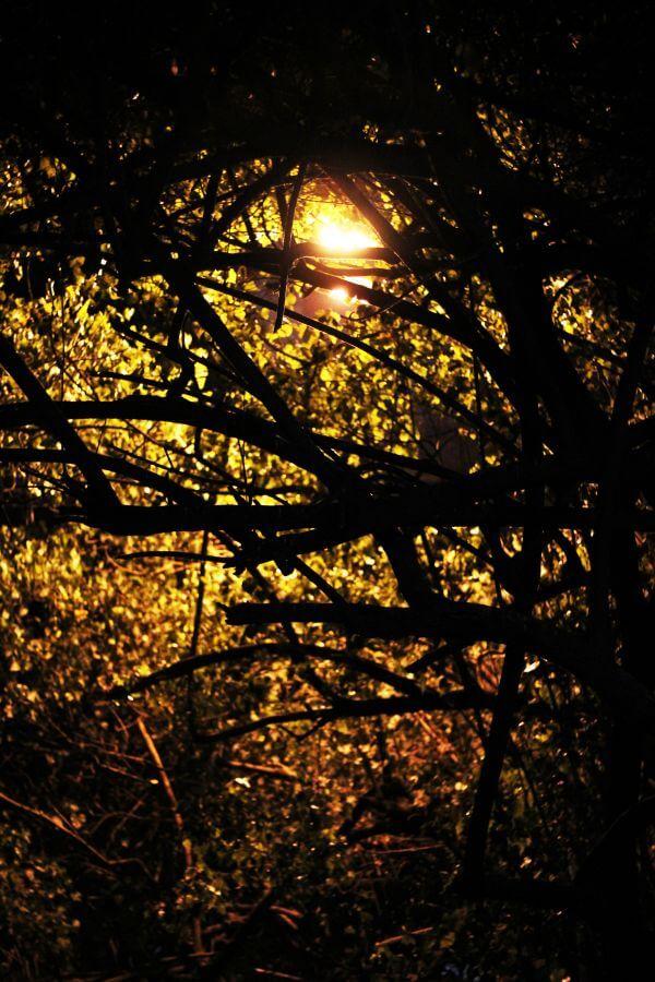 Trees Street Lights photo