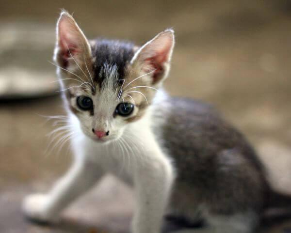 Very Cute Kitten photo
