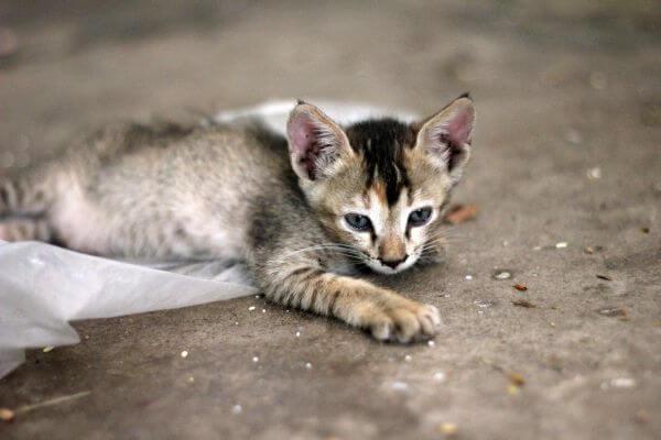 Baby Cat Kitten Cute photo