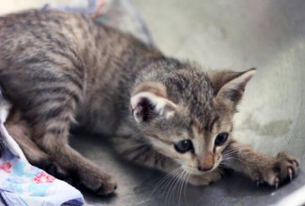 Baby Kitten photo
