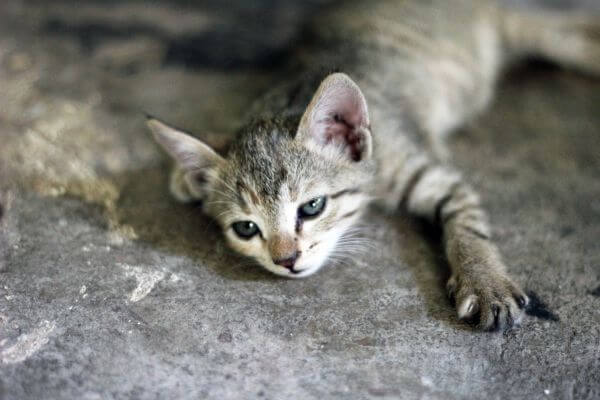 Cute Lovely Kitten photo