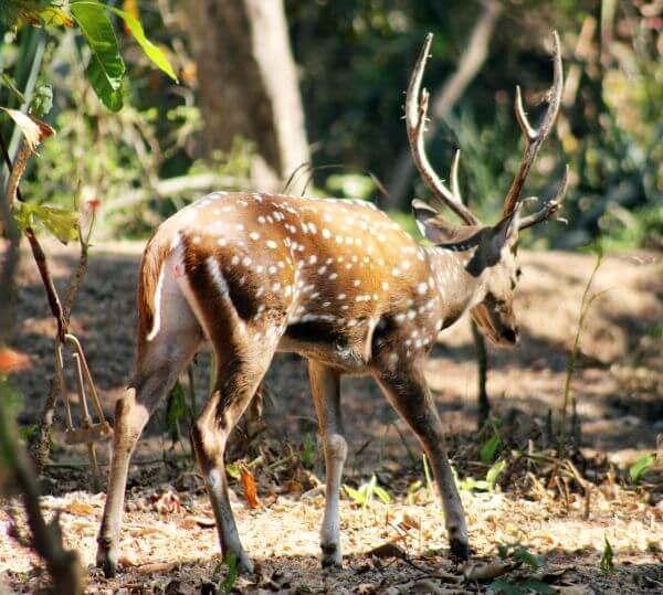Deer 1 photo