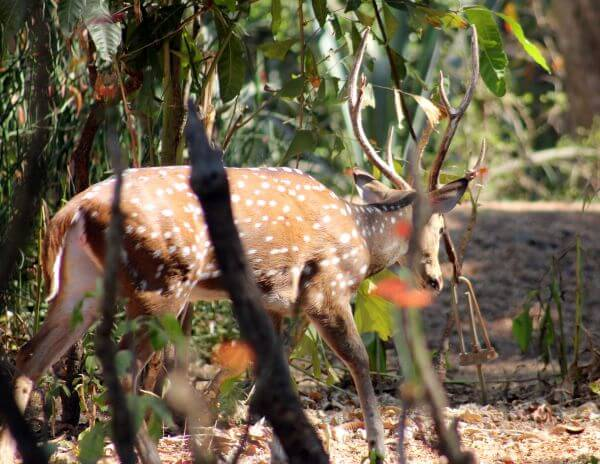 Deer 2 photo
