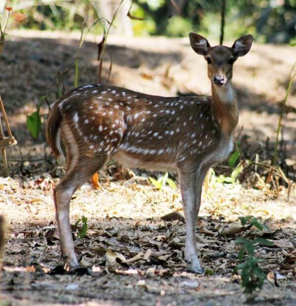 Deer 3 photo