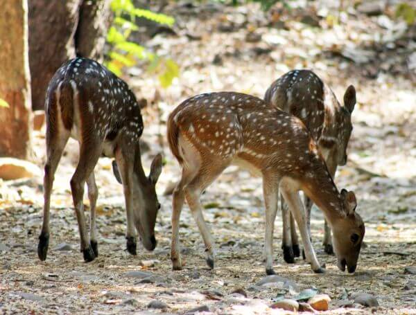 Deers National Park photo