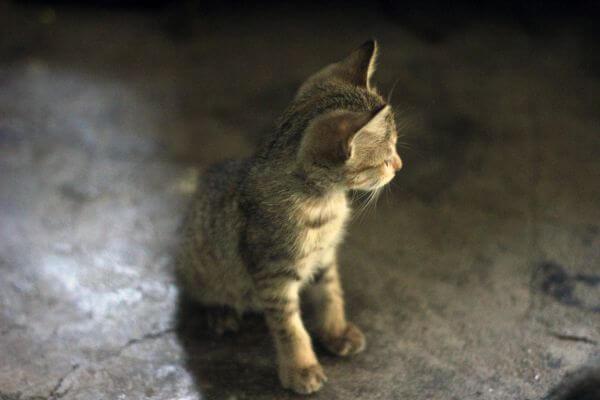 Kitten 2 photo
