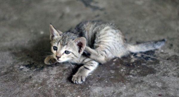 Kitten 3 photo