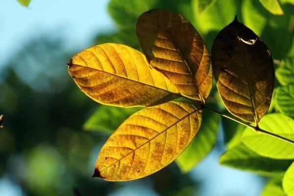 Beautiful Yellow Leaves Autumn photo