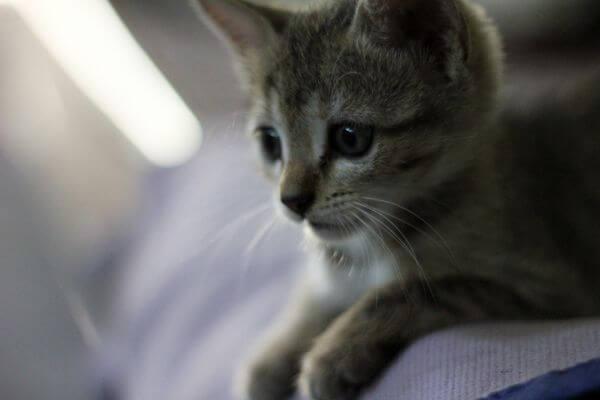 Kitten Baby photo