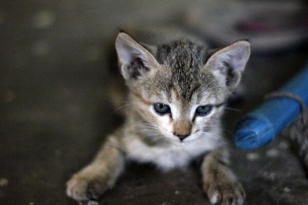Kitten Cutie Pie photo