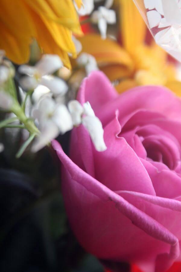Bouquet Closeup Rose Pink photo