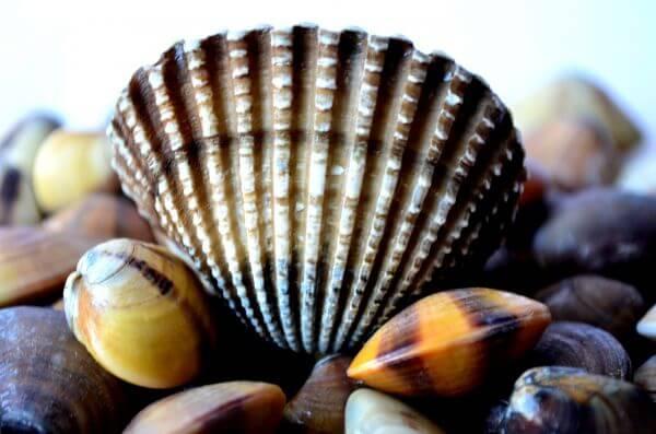 Big Shell Beautiful photo