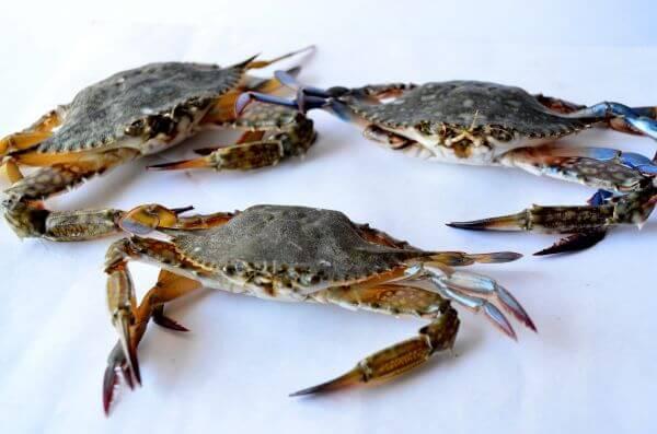 Crabs 2 photo