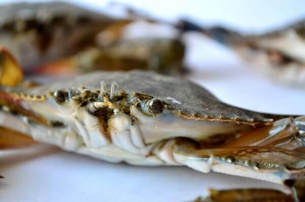 Crabs photo