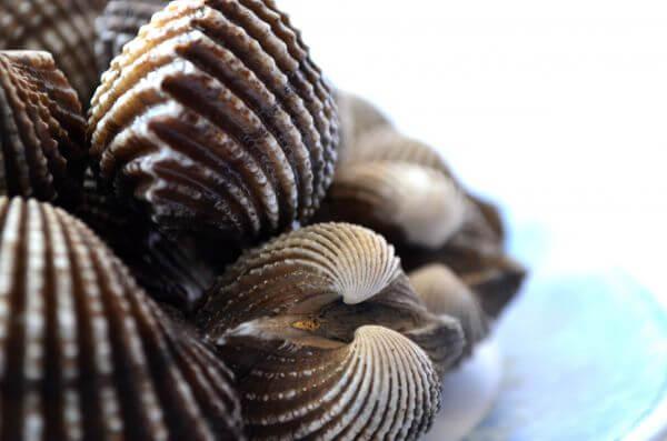 Pile Of Shells photo