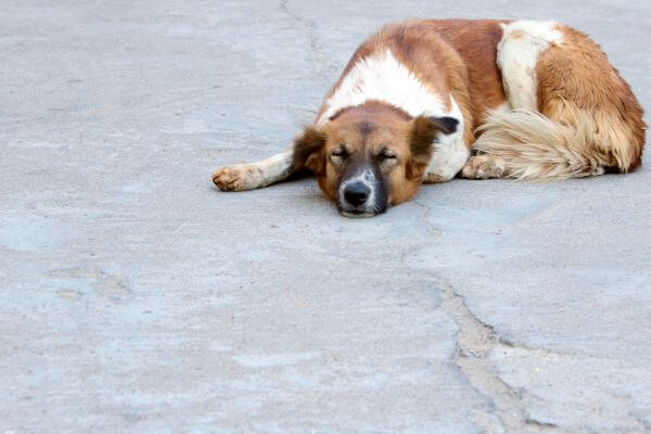Dog Sleeping On The Road photo