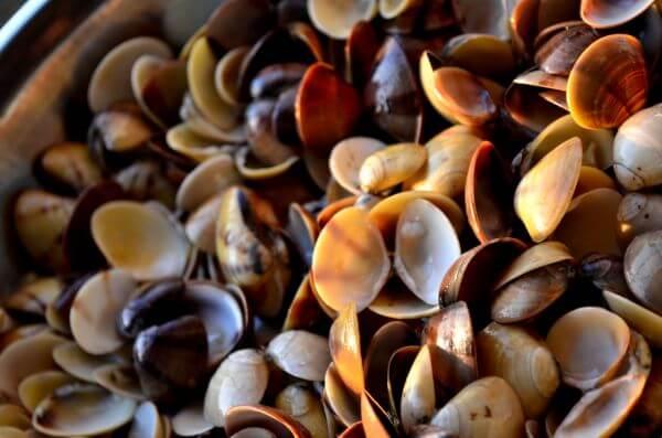 Sea Shells 2 photo