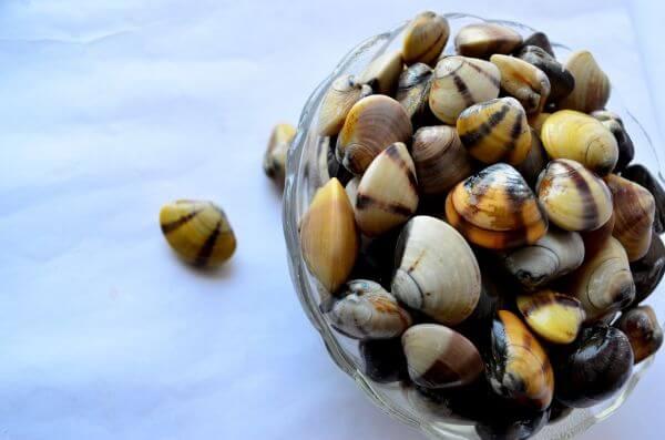 Sea Shells Bowl 2 photo