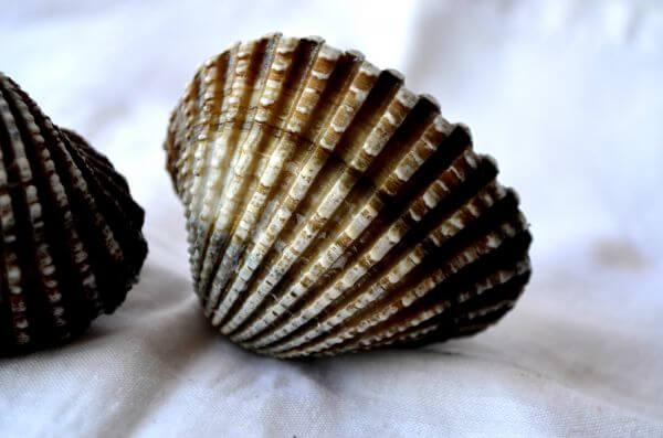 Shell Closeup photo