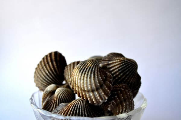 Shells In A Bowl photo
