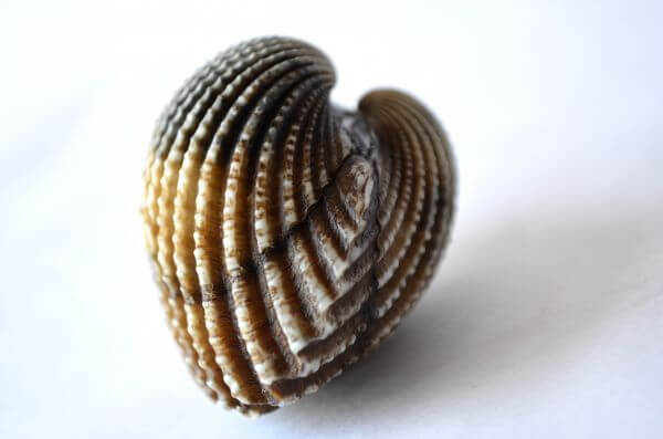Shells Oyster Shaped photo