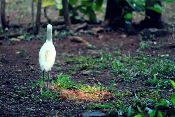 Egret Heron Bird photo