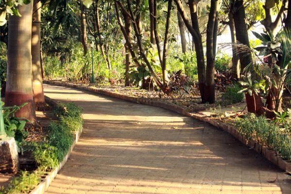 Garden Pathway photo