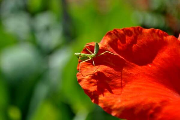 Green Insect On Flower photo