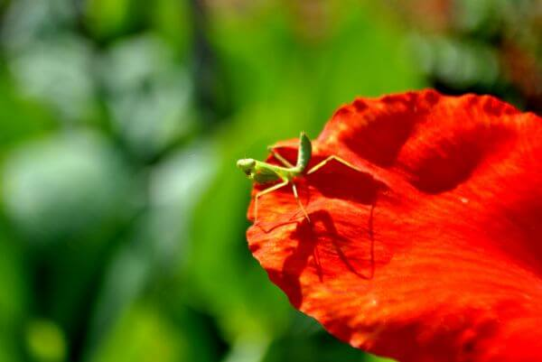 Green Insect Red Flower photo