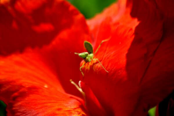 Green Insect photo