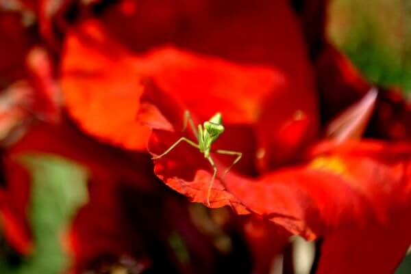 Insect On Flower photo