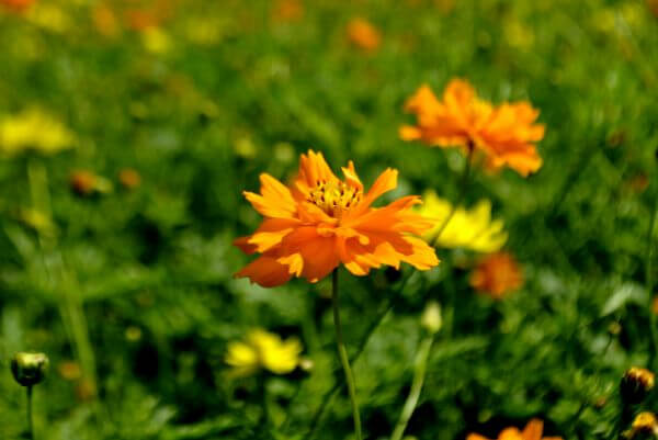 Orange Flower Garden photo