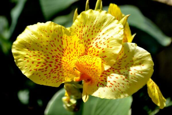 Orchid Like Flower Yellow photo