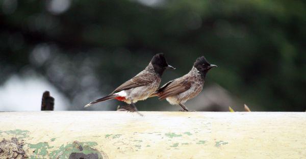 Two Cute Birds photo