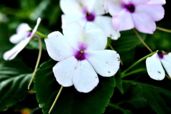 White Purple Flower photo