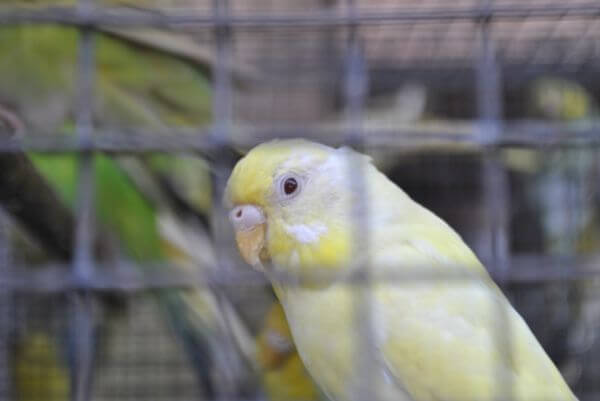 Birds In Captivity photo