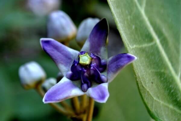 Blue Purple Flower photo