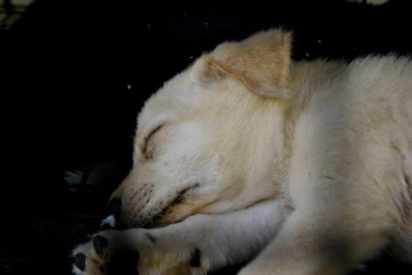Dog Sleeping Cute photo