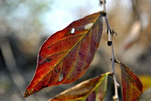 Leaf Insects Eaten photo